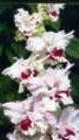 Клюква в сахаре 461-06-РС-ССГ, Дыбов